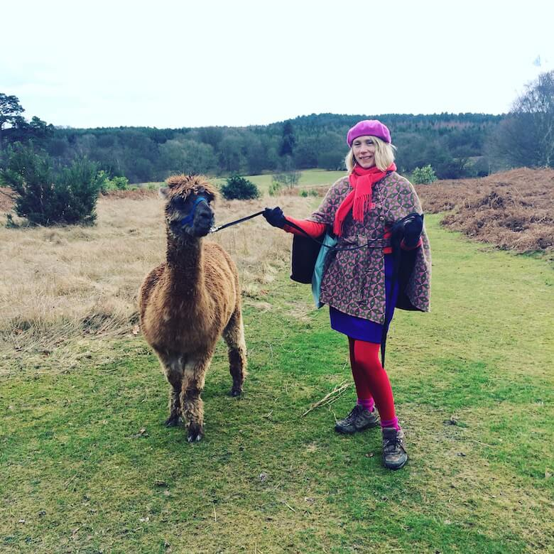 walking-alpaca