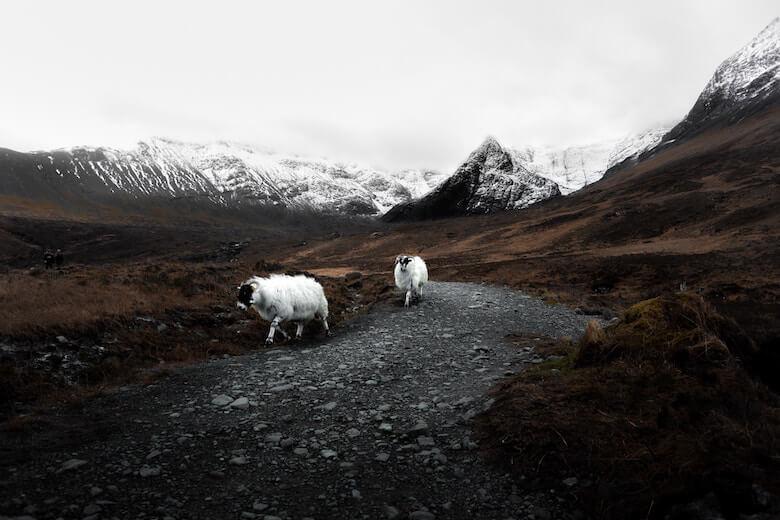 how wool keeps us warm